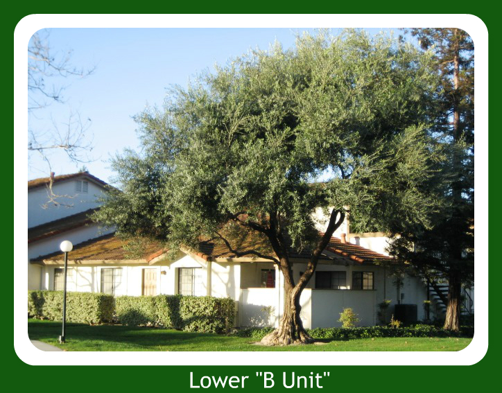 2 bedroom lower unit condo in Colony Green