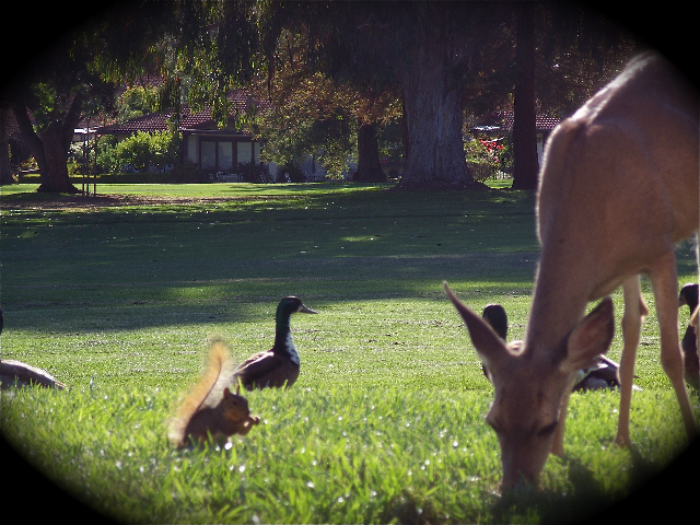 deer and birds at the villages